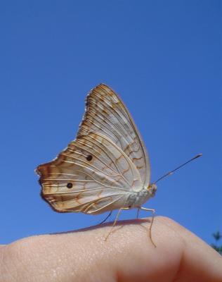La mariposa...